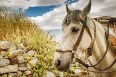 Um resto grego da mula do bloco entre laods com o Agean azul no fundo Foto de Stock