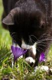 Um retrato bonito de um gato preto e branco Imagens de Stock Royalty Free