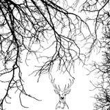 Um retrato de um cervo nos ramos Fotografia de Stock Royalty Free