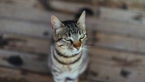 Um retrato do gato Foto de Stock Royalty Free