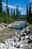 Um retrato do rio que flui entre a madeira e o ston Fotografia de Stock Royalty Free