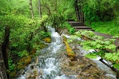 Um ribeiro através da floresta Imagem de Stock
