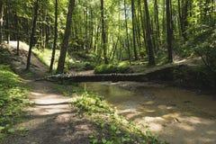 Um ribeiro em uma floresta densa Imagens de Stock Royalty Free