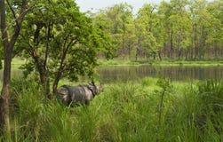 Um rinoceronte Imagem de Stock
