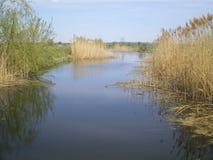 Um rio azul pequeno na mola adiantada e em juncos altos secos nos bancos imagem de stock
