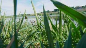 Um rio bonito com um bastão coberto de vegetação vídeos de arquivo