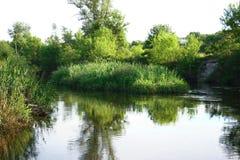 Um rio com arbustos e árvores Foto de Stock