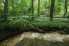 Um rio da floresta Foto de Stock