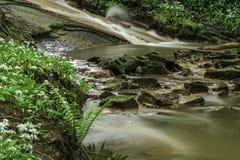 Um rio da floresta Fotos de Stock Royalty Free