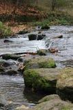 Um rio em Luxemburgo Imagem de Stock