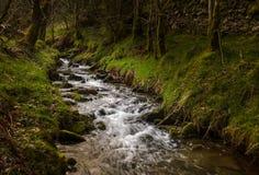 Um rio em uma floresta místico foto de stock