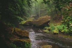 Um rio pequeno com cenário nevoento fotos de stock royalty free