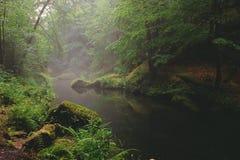 Um rio pequeno com cenário nevoento fotos de stock