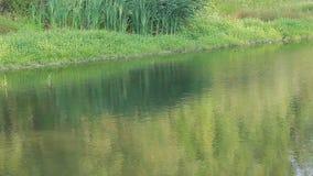 Um rio pequeno com uma costa pantanoso filme