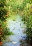 Um rio pequeno em um prado perto de kiev, com os bancos gramíneos cobertos de vegetação com a grama, e a lentilha-d'água na água imagem de stock royalty free