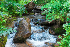 Um rio pequeno em uma floresta verde densa cria uma cachoeira pequena Fotos de Stock Royalty Free