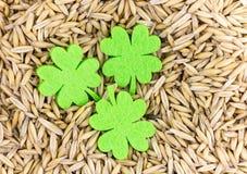 Um símbolo de três trevos da felicidade e da sorte na perspectiva do centeio semeia a base bege clara Imagens de Stock Royalty Free