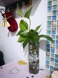 um saco pequeno de veludo vermelho e uma planta verde em casa foto de stock
