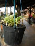 Um salvamento pequeno do flowerpot o mundo Fotos de Stock