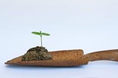 Um seedling Fotografia de Stock Royalty Free