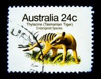 Um selo impresso em Austrália mostra uma imagem do tigre tasmaniano do Thylacine no valor em 24 centavos Fotografia de Stock Royalty Free