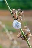 Um shell do caracol na haste Fotos de Stock Royalty Free