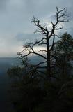 Um silhouet da árvore em um céu nebuloso Imagem de Stock