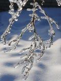 Um sincelo com um ramo dentro da faísca no Sun na perspectiva da neve Imagens de Stock
