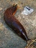Um slug Imagens de Stock