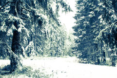 Um sneefall na floresta foto de stock royalty free