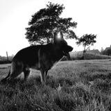 Um sonho dos cães imagem de stock royalty free