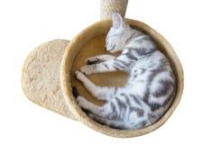 Um sono do gato na cubeta imagens de stock