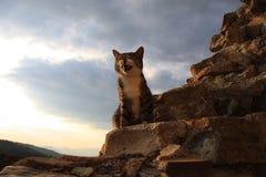 Um sorriso novo do gato Foto de Stock