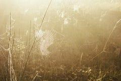 Um spiderweb congelado pela geada do inverno imagem de stock