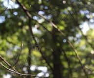 Um spiderweb em uma árvore imagens de stock