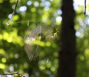 Um spiderweb em uma árvore fotografia de stock royalty free