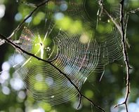 Um spiderweb em uma árvore imagem de stock royalty free
