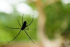 Um spiderweb no fundo da natureza o spiderweb ou a teia de aranha são um devic foto de stock