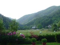 Um Spring Valley em Eslovênia imagem de stock