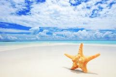 Um starfish em uma praia no console de Maldives Fotografia de Stock Royalty Free