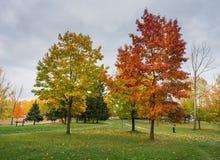 Um suporte das árvores com cores do outono fotografia de stock royalty free
