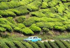 Um táxi no chá coloca em Cameron Highlands, Malásia fotos de stock