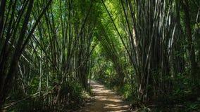 Um túnel da floresta feito das árvores de bambu em Tailândia fotografia de stock royalty free