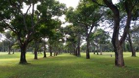 Um túnel das árvores em um campo de golfe Fotografia de Stock Royalty Free