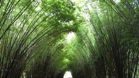 Um túnel de bambu verde Imagens de Stock Royalty Free