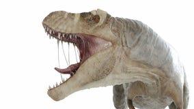 Um t-rex ilustração royalty free