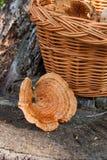 Um tampão do leite do açafrão no fundo de madeira natural Imagens de Stock