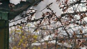 Um tampão enorme da neve no telhado de uma casa do vintage nos ramos de florescência da mola da agitação do vento de árvores de m filme