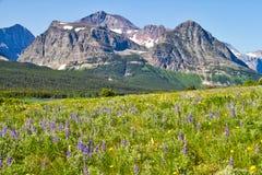 Um tapete dos Wildflowers no parque nacional de geleira imagens de stock