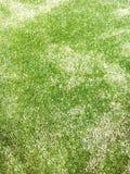 Um tapete verde Imagem de Stock